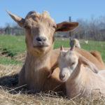 Eytana & Sukumar from Indraloka Animal Sanctuary