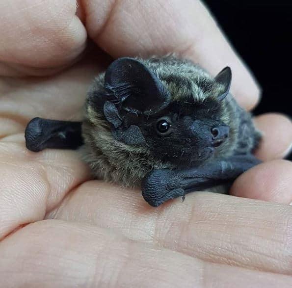 A bat from Batworld