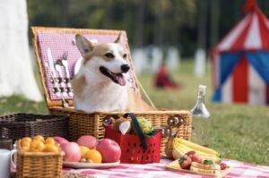 dog at vegan picnic