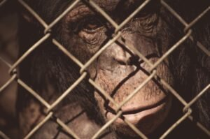 are zoos vegan