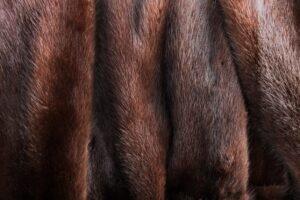 vegans do not wear fur