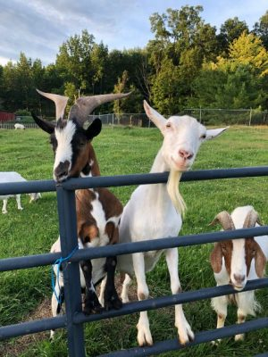 August 19 Snack Box Red Robin Song Animal Sanctuary
