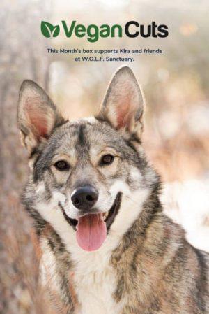 WOLF Sanctuary Summer 19 MB Insert_2019